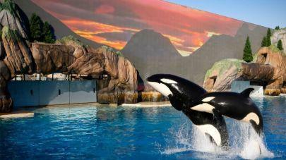 sd-me-orca-encounter-20170527
