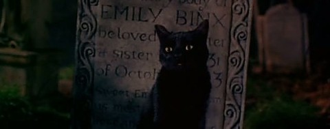 binx-the-cat-grave